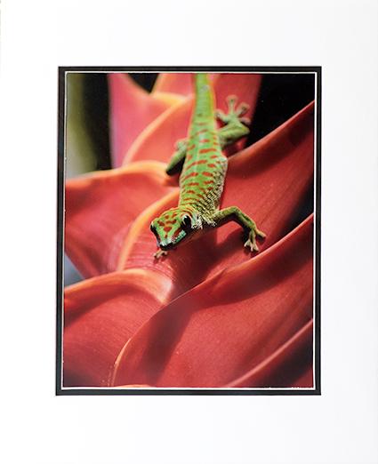 Gecko Print By Ericka Hoffmann
