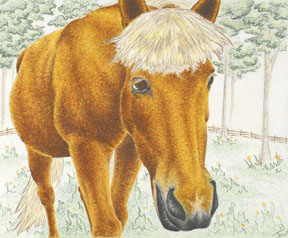 Frayer in the Flowers ©, Icelandic Horse Drawing