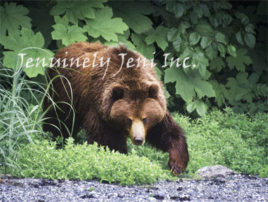 bear_emerges