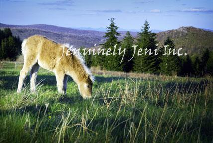 peaceful_foal