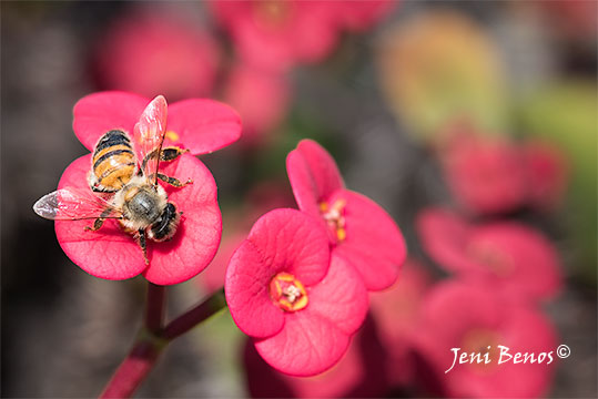 photograph-of-bee